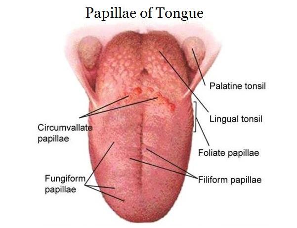 tongue papillae causes