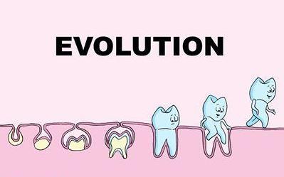 name of teeth